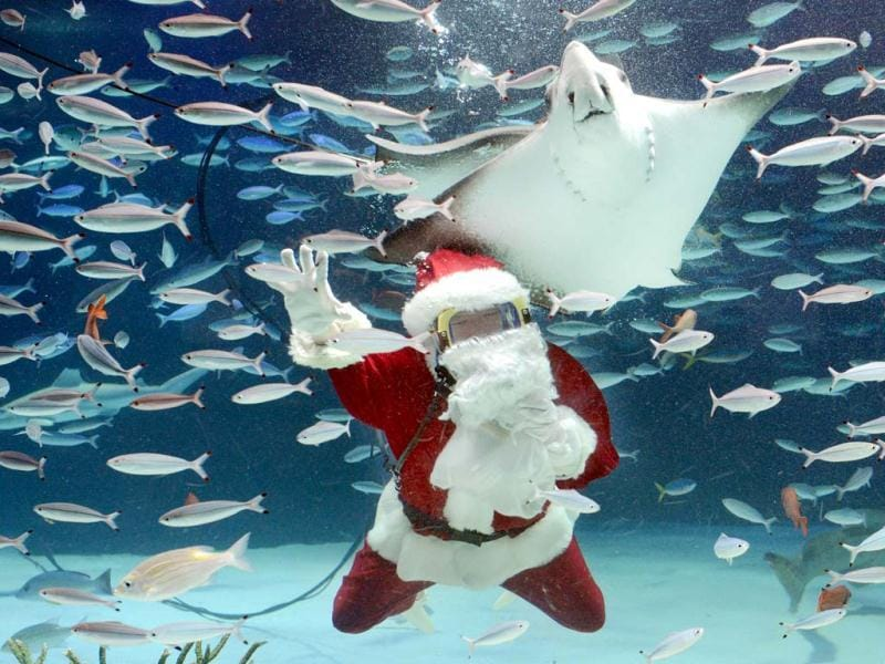A diver wearing a Santa Claus costume swims with fish at Sunshrie Aquarium in Tokyo. The aquarium is holding the Christmas show twice daily until December 25 to attract visitors. AFP/Toru Yamanaka