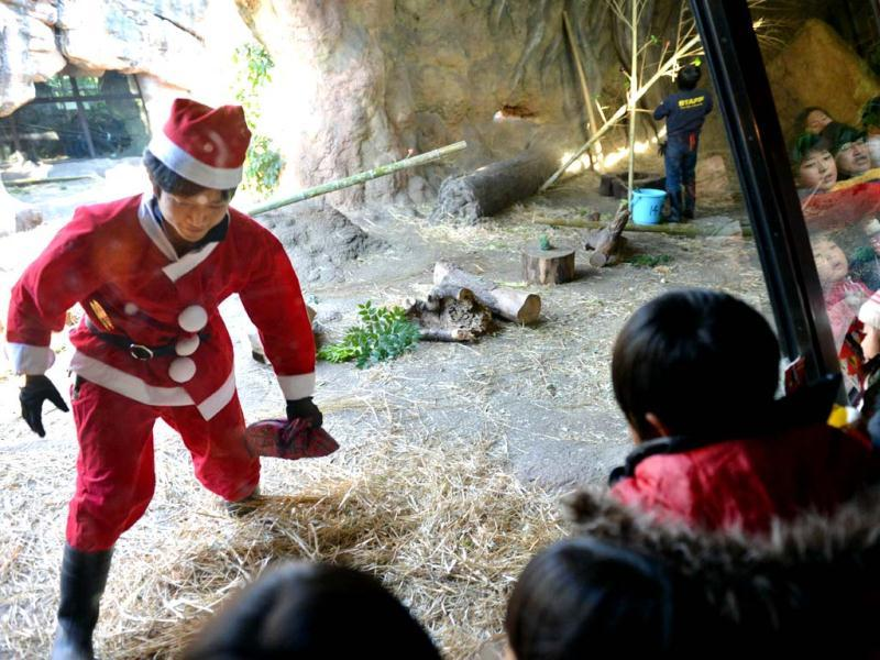 A zoo staff member wearing a Santa Claus costume prepares a special feed for the gorillas at Tokyo's Ueno Zoo. The event was as part of an annual 'Christmas presents' attraction. (AFP Photo)