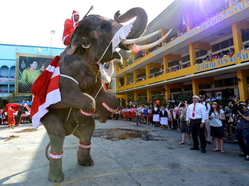 An elephant dressed in a Santa Claus costume performs for students ahead of the Christmas at a school in Ayutthaya province. The event was held as part of a campaign to promote Christmas in Thailand. (AFP Photo)