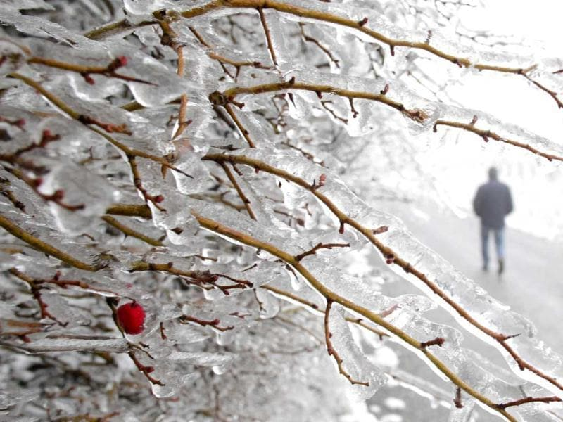 A wild berry is covered with ice along a driveway at the periphery of Vienna. Reuters photo