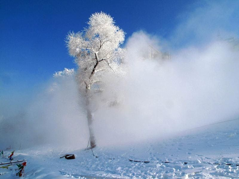 Ice covered trees in Jilin, northeast China's Jilin province. AFP