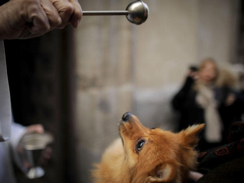 A dog is blessed by a priest at San Anton church in Madrid on Saint Anthony's Day. AFP