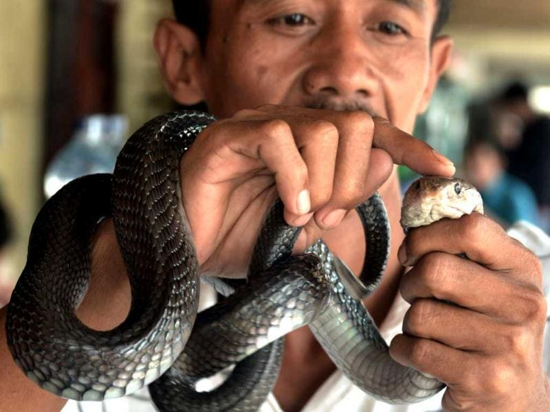 A man holds a cobra he sells for medicine at a Chinese majority business complex in the Indonesian capital city of Jakarta, the country's minority Chinese-Indonesians prepare to celebrate the Chinese New Year. (AFP Photo)