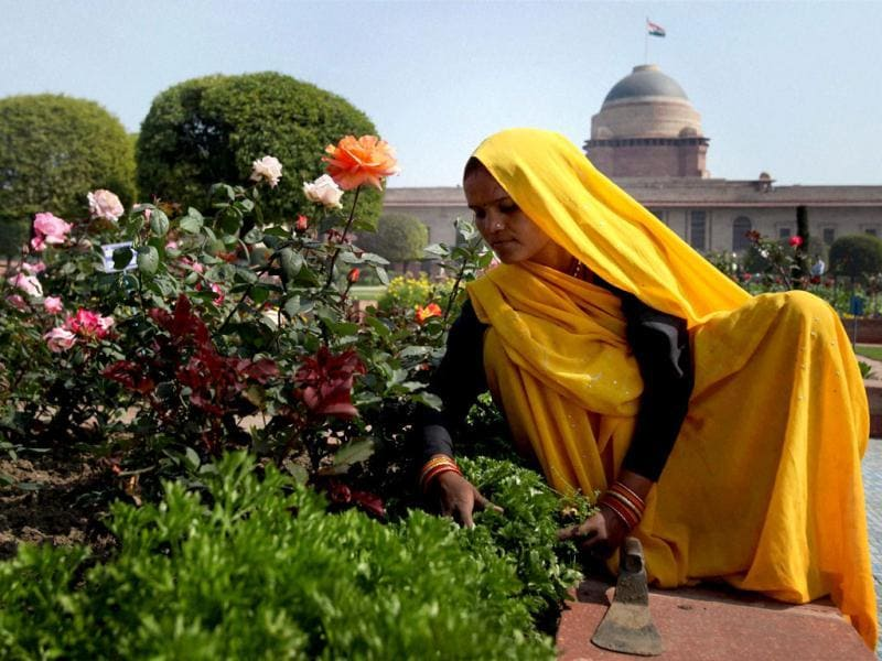 A woman gardener gives finishing touches at the Mughal Gardens of the Rashtrapati Bhavan. The gardening team has made special efforts to keep the colour theme of flowers a predominant yellow and white. PTI/Atul Yadav