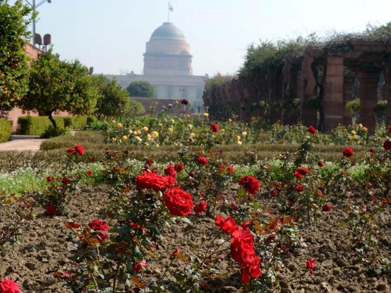 A bed of roses is seen at the Mughal Gardens at Rashtrapati Bhawan. There will be special enclosures like the spiritual, herbal and Bonsai gardens. AFP/Raveendran