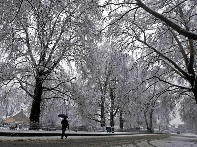 A man carrying an umbrella walks under snow-covered trees after snowfall in Srinagar. Reuters