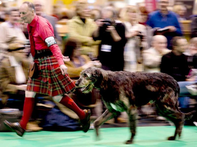 A handler wearing a kilt shows his Irish Wolf Hound during the first day of the Crufts dog show in Birmingham, in central England. The annual event sees dog breeders from around the world compete in a number of competitions with one dog going on to win the