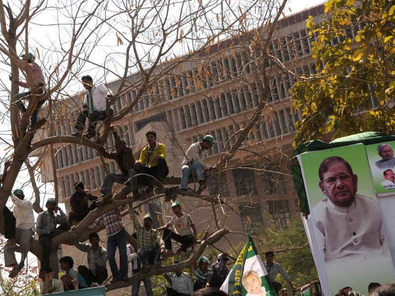 Supporters of Janta Dal (U) climb up on a tree to have a better view during a rally of Bihar chief minister Nitish Kumar demanding the status of special state, at Ramlila Maidan in New Delhi. (Photo by Arijit Sen / Hindustan Times)
