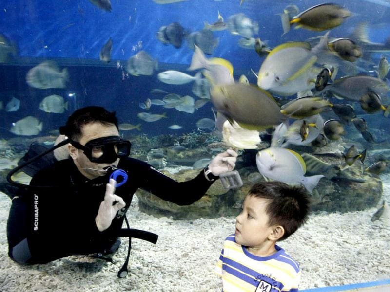 A professional diver gestures as a boy watches him feeding fish inside an aquarium at Ocean Park in Manila. (Reuters)