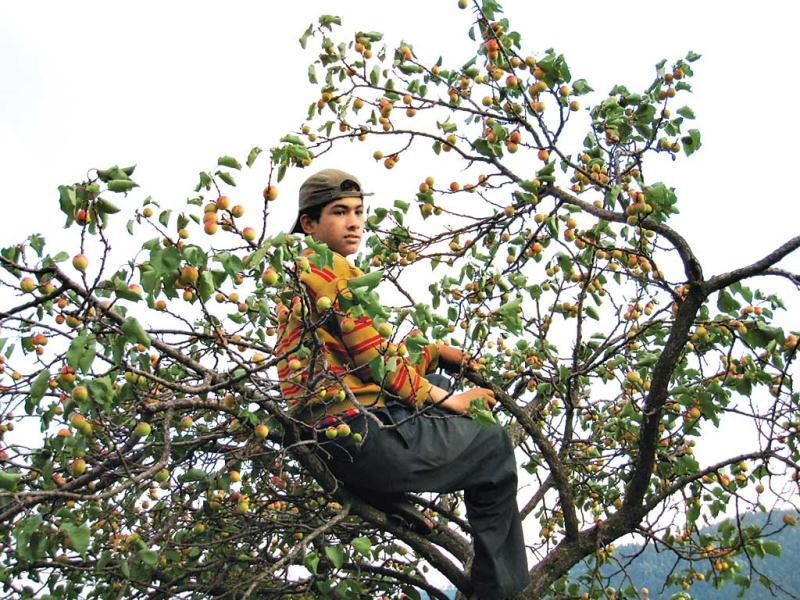 When all fails, go climb a tree. Shimla, 2008Uploaded by Aasheesh Sharma