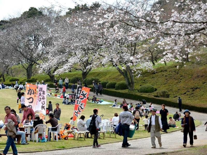People relax near fully bloomed cherry blossom trees in Fujinomiya, about 160 kms west of Tokyo. Tokyo's cherry trees were in stunning full bloom, Japan's weather agency said, marking the second earliest blossoming in the capital on record. AFP/Kazuhiro Nogi
