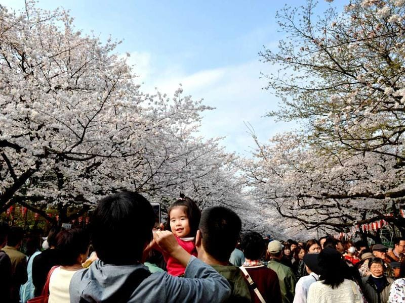 People walk under fully bloomed cherry blossom trees in Tokyo. Tokyo's cherry blossom trees were in full bloom, Japan's weather agency said, marking the second earliest blossoming in the capital on record. AFP/Kazuhiro Nogi