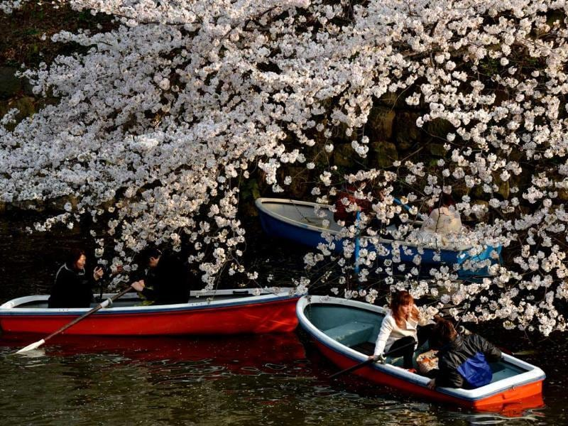 Couples row boats under fully bloomed cherry blossom trees in Tokyo. Tokyo's cherry blossom trees were in full bloom, Japan's weather agency said, marking the second earliest blossoming in the capital on record. AFP/Kazuhiro Nogi