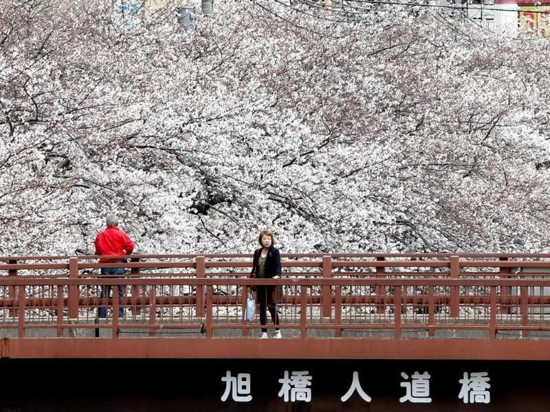 People enjoy the blooming cherry blossoms in Yokohama. Tokyo's cherry blossom trees were in full bloom, Japan's weather agency said, marking the second earliest blossoming in the capital on record. AP/Koji Sasahara