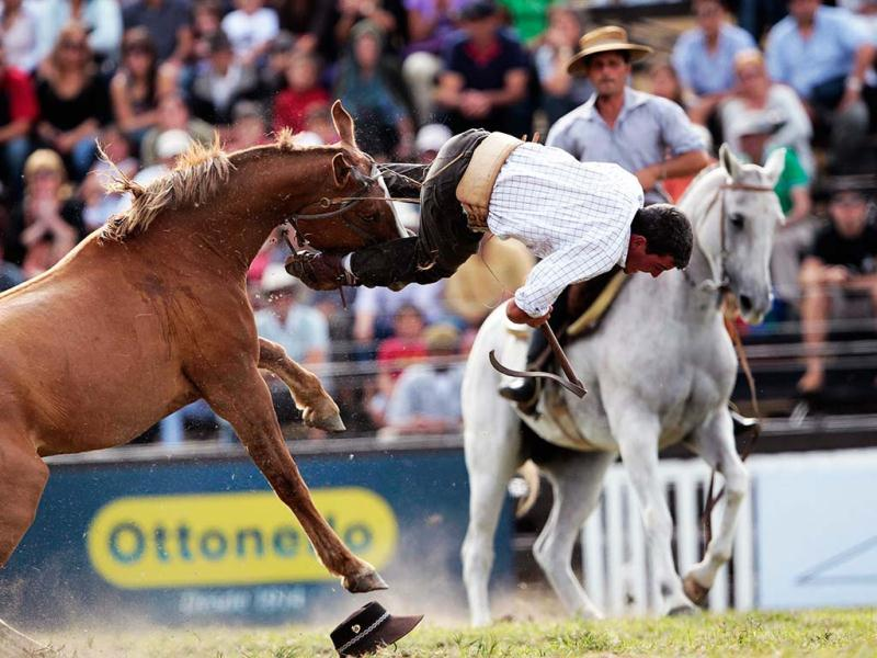 A gaucho is unseated by an unbroken horse during the annual celebration of Criolla Week in Montevideo. REUTERS