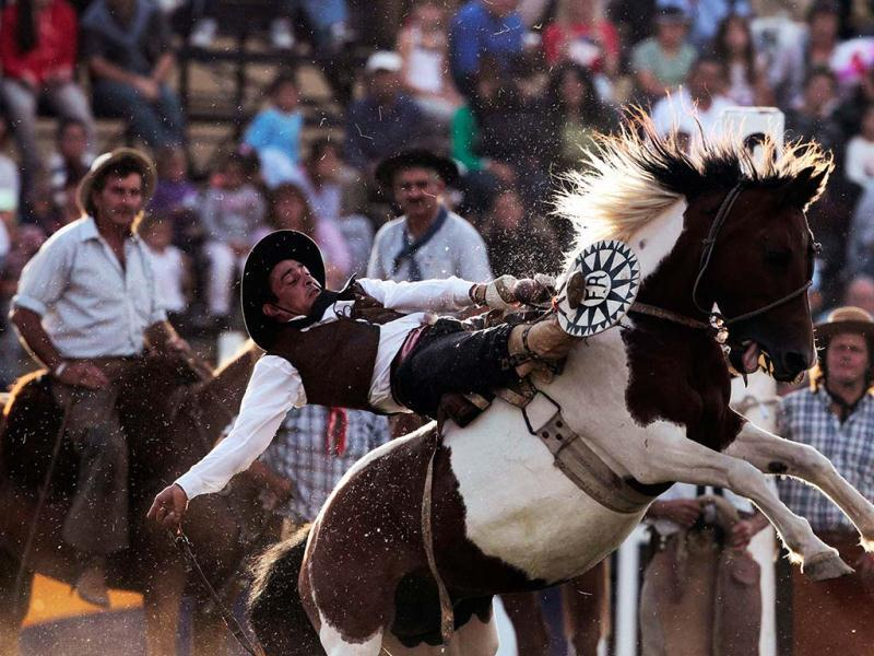 A gaucho rides an unbroken horse during the annual celebration of Criolla Week in Montevideo. REUTERS/Andres Stapff