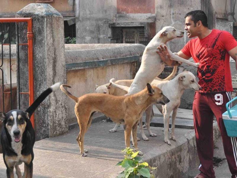 "Abhishek Bhowmick dedicated his life to the welfare of animals. He lives in Goregaon, but wakes up at 5:30am every day, travels to his parents colony in Dombivli and feeds 30 hungry mutts. The moment he steps foot in the society, they all charge towards him. ""It's almost like that cheesy scene from Kabhi Khushi Kabhi Gham when SRK enters the house and Jaya [Bachchan] can feel his presence. My dogs are damn filmi."" (Photo: Rishikesh Choudhary)"
