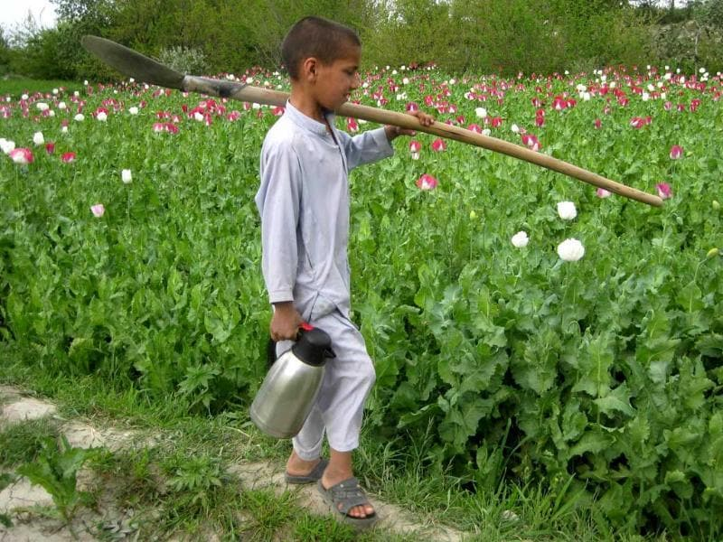 A boy carries a flask as he works in a poppy field in Khogyani district, eastern Nangarhar province, Afghanistan. AFP photo