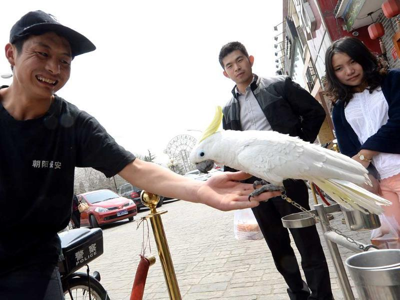 A Chinese security guard plays with a parrot as passerbys watch outside a restaurant in Beijing after health authorities reported the first human case of H7N9 bird flu as the disease spread to the capital city. AFP