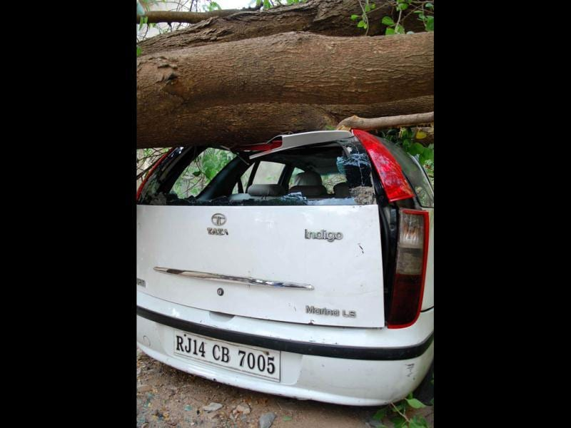 A car trapped under a tree in the aftermath of the tremors felt in Jaipur following the major 7.8 level earthquake in Iran. UNI