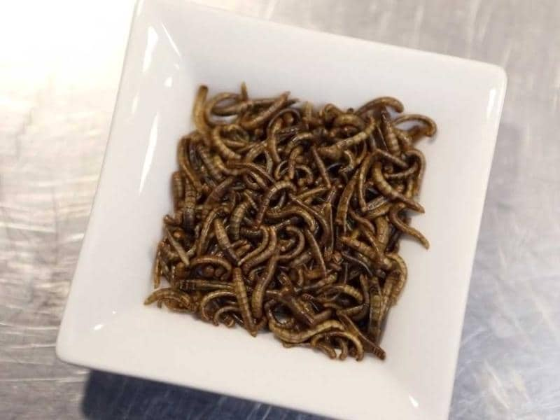 Picture of a dish of worms taken in the kitchen of