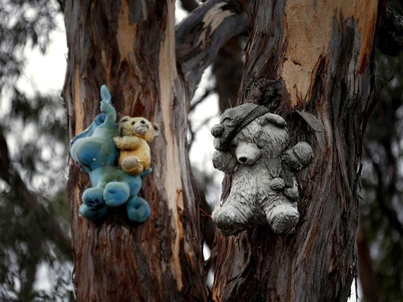 Stuffed toys hang from the side of a tree lining a country road near the Australian capital city of Canberra. (Reuters)