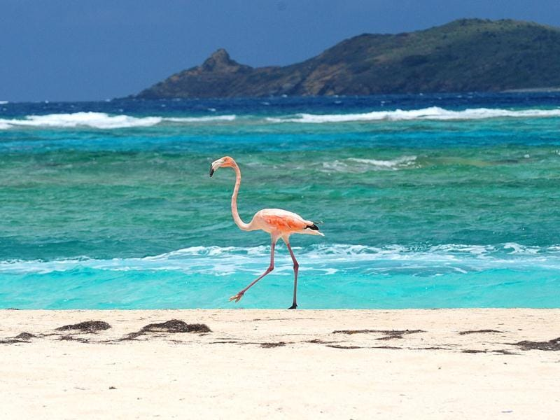 A flamingo walks along the beach on Necker Island in the British Virgin Islands. Richard Branson, the adventuring CEO and founder of the Virgin Group of companies is co-hosting a two-day meeting at Necker Island where he has developed an ultra-exclusive eco-resort that showcases renewable energy technology, reintroduced flamingoes, imported lemurs and other creatures. (AP Photo)