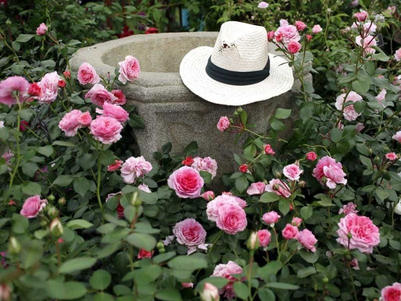 A straw hat is seen in a rose garden during media day at the Chelsea Flower Show in London. Reuters
