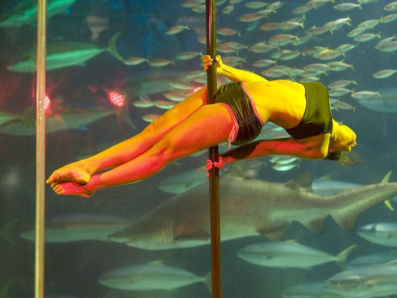 Participants perform during the third annual Pole Dancing Showcase at the Two Oceans Aquarium in Cape Town. AFP PHOTO