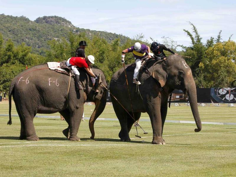 A player from The Devil (CDD) team (L) fights for the ball with a player from the Sara Story Design team at the annual King's Cup Elephant Polo Tournament in Hua Hin, south of Bangkok. (Reuters Photo)