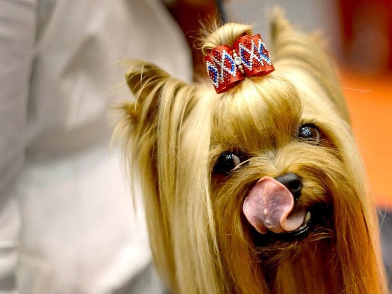 Dogs from all corners of Europe compete in Geneva to win the title of the most beautiful dog in Europe. AFP