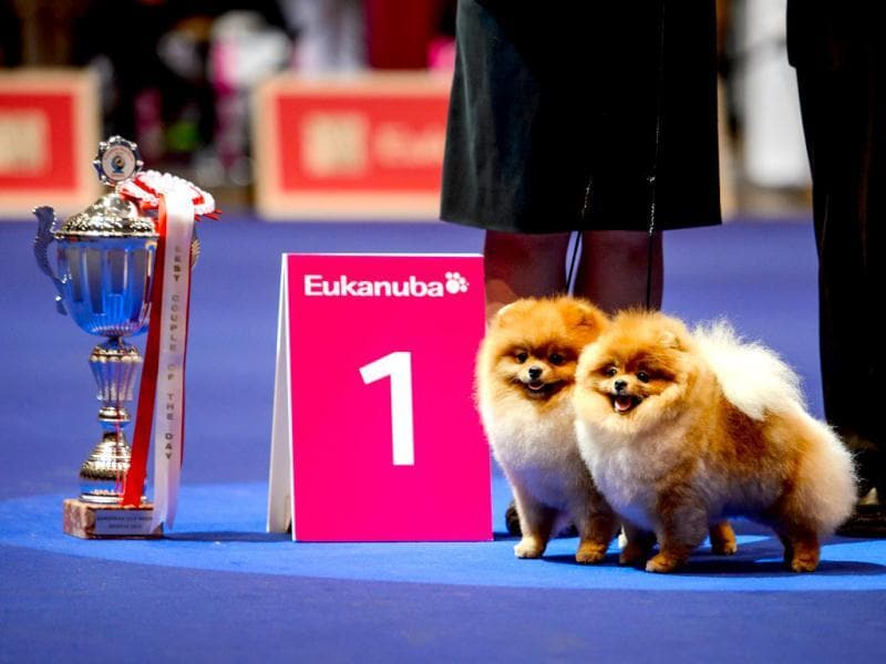 A pair of dogs pose next to their trophy during the European Dog Show on August 30, 2013 in Geneva. AFP