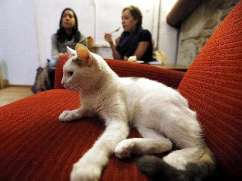 A cat stands on a table among consumers at the Cafe des chats, the first cat cafe in Paris. AFP photo