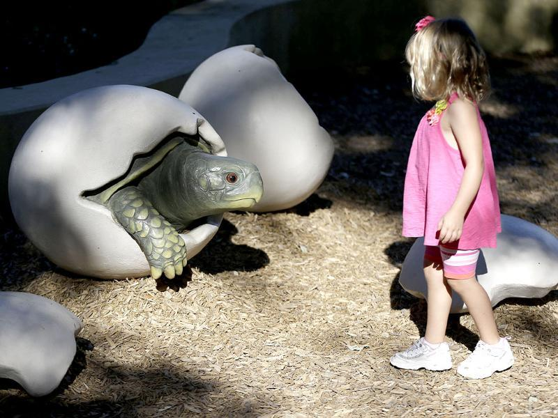 A child looks at a giant turtle shell display at the Rory Meyers Children's Adventure Garden in Dallas, US. (AP Photo)