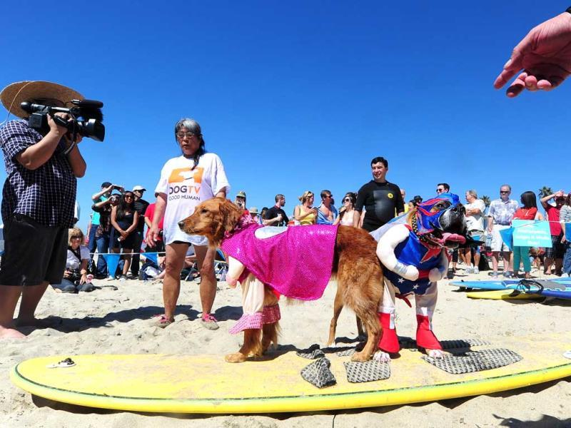Surf dogs Kalani (L) and Hanzo (R) pose for the media before surfing in tandem at the 5th Annual Surf Dog competition at Huntington Beach, California. (AFP Photo)