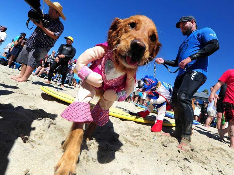 Surf dogs Kalani (L) and Hanzo (R) meet the media before surfing in tandem at the 5th Annual Surf Dog competition at Huntington Beach, California. (AFP Photo)