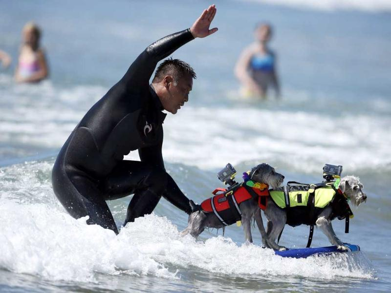 A man surfs with two dogs on his board during the 5th Annual Surf Dog Competition at Huntington Beach, California. (Reuters)