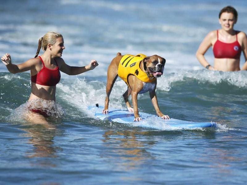 A dog competes at the 5th Annual Surf Dog Competition at Huntington Beach, California. (Reuters)