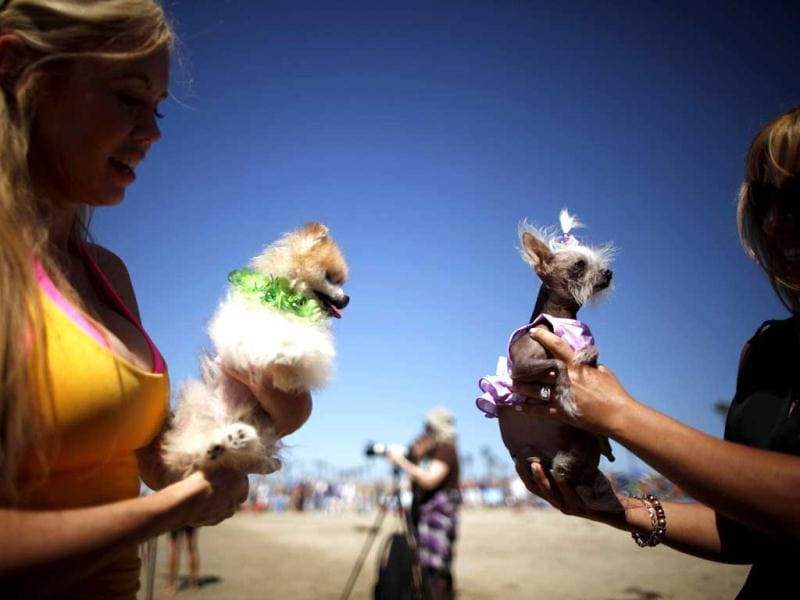 Women hold their dogs at the 5th Annual Surf Dog Competition at Huntington Beach, California. (Reuters)