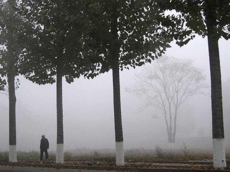 A man walks past trees on the sidewalk of a street amid heavy haze in Beijing. A chronic shortage of natural gas is hurting China's plan to move away from burning coal to heat homes and offices, raising the prospect of more choking air pollution this winter and beyond. The problem is worst in northern China, where air pollution mainly caused by decades of reliance on coal has lowered life expectancy by an estimated 5.5 years compared to the south, Chinese and international researchers said in July. (Reuters)
