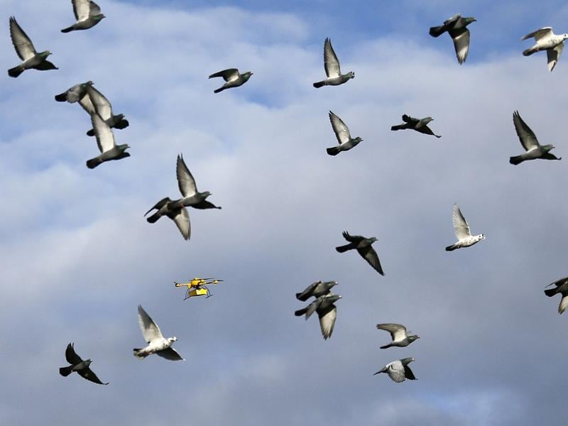 A flock of pigeons flies with a prototype