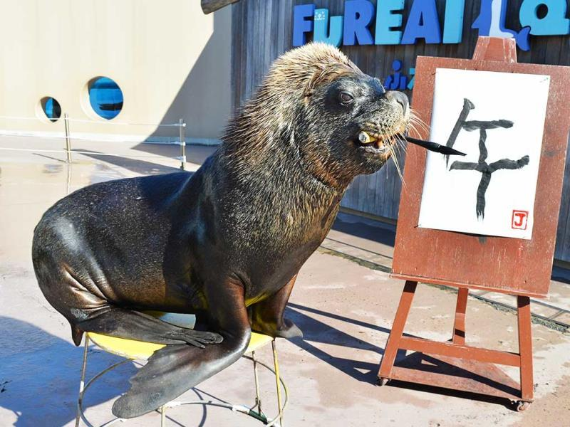 Sea lion Jay paints a Chinese character reading