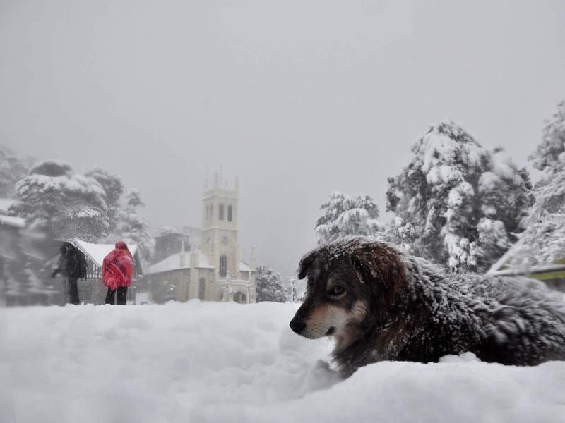 A dog tries to keep warm as people walk down snow covered roads in Shimla. (Santosh Rawat/HT Photo)