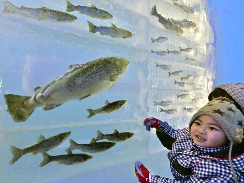 A child looks at frozen fish displayed at the annual ice festival, to be held until February 16. (AFP)