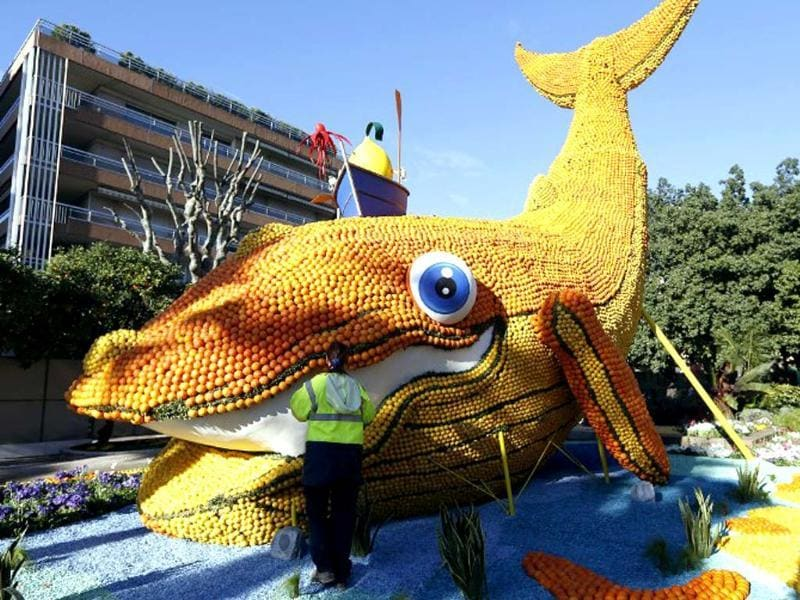 A man works on a sculpture, representing an whale, made of oranges and lemons in Menton on the French Riviera, ahead of the start of the Fete du Citron (Lemon carnival). The theme of this 81st edition, running from February 15 until March 5, 2014, is 20 000 lieues sous les mers (Twenty Thousand Leagues Under the Sea). (AFP photo)