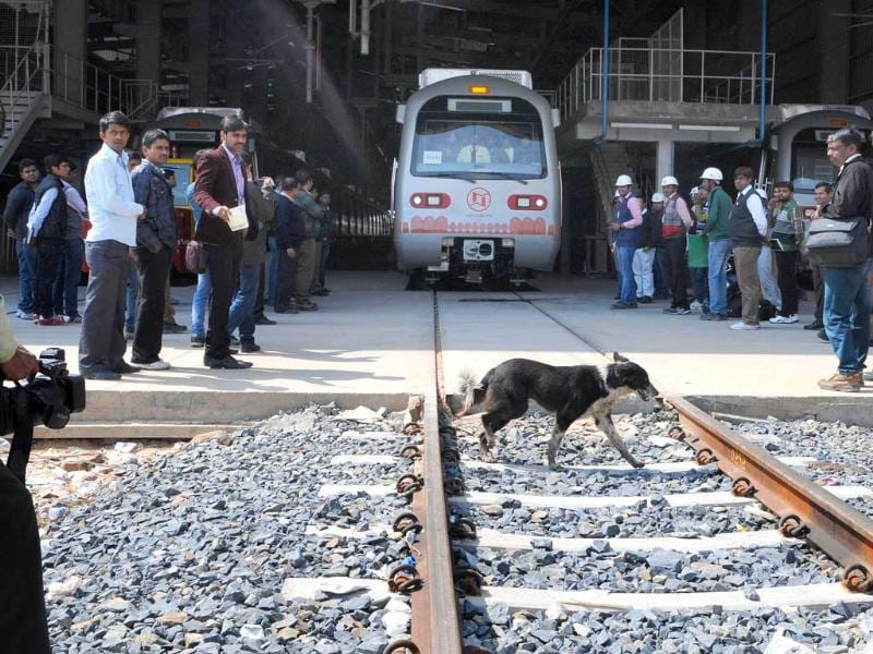 A dog crosses the track just as the Jaipur Metro prepares to leave the yard for safety tests during its first Test-run in Jaipur.(HT photo/Himanshu Vyas)