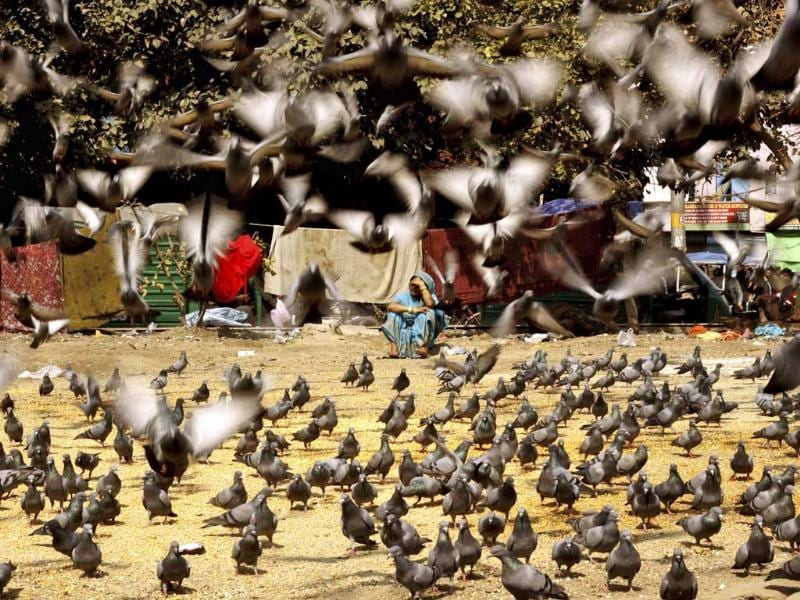 A homeless woman rests as pigeons are fed in New Delhi, India. (AP Photo)