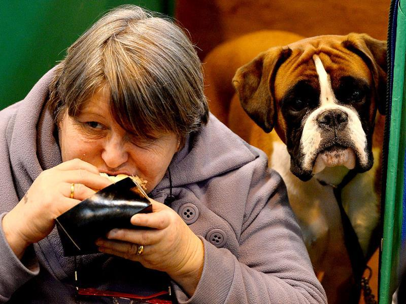 A Boxer dog looks on as its owner eats her lunch during the first day of the Crufts dog show in Birmingham central England. The annual event sees dog breeders from around the world compete in a number of competitions with one dog going on to win the
