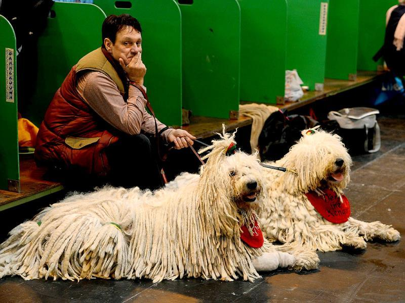A man sits with his Komondor dogs during the first day of the Crufts dog show in Birmingham central England. The annual event sees dog breeders from around the world compete in a number of competitions with one dog going on to win the