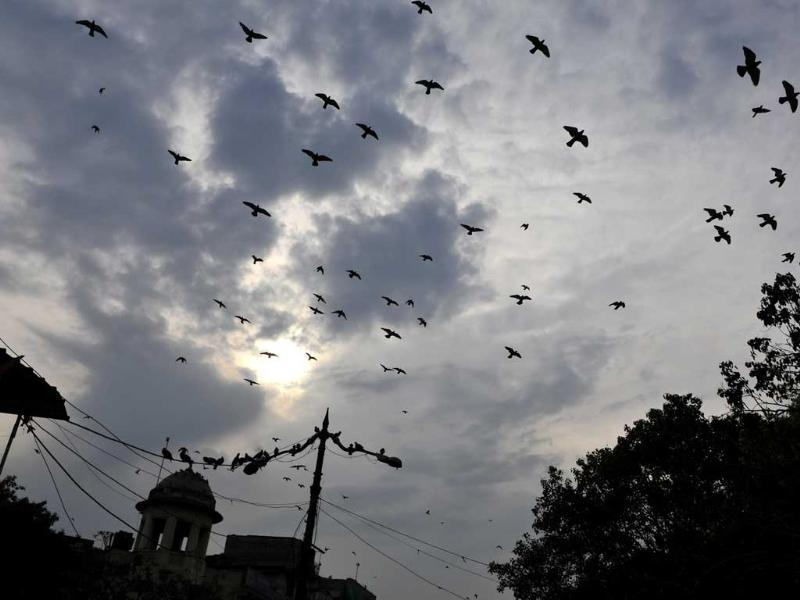 Early morning rain in Delhi leads to drop in maximum temperature. (Subrata Biswas/HT)